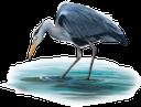 фауна, птицы, цапля, bird, heron, vogel, reiher, faune, oiseau, héron, pájaro, garza, uccello, airone, fauna, pássaro, garça real