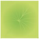 лист лотоса, lotus leaf, зеленый лист, водное растение, green leaf, water plant, lotusblatt, grünes blatt, wasserpflanze, feuille de lotus, feuille verte, plante aquatique, hoja de loto, hoja verde, planta acuática, foglia di loto, foglia verde, pianta acquatica, folha de lótus, folha verde, planta aquática, зелений лист, водна рослина