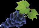 виноград, гроздь винограда, ягода, grapes, berry, a bunch of grapes, beeren, trauben, baies, raisin, bayas, uvas, frutti di bosco, baga, uva, гроно винограду