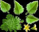укроп, листья помидора, зеленый лист, овощи, продукты питания, зеленое растение, еда, специи, зеленый, tomato leaves, greens, green leaf, vegetables, green plant, food, seasoning, spices, green, dill, tomatenblätter, grüns, grünes blatt, gemüse, grünpflanze, lebensmittel, gewürze, grün, aneth, feuilles de tomate, légumes verts, feuille verte, légumes, plante verte, nourriture, assaisonnement, épices, vert, eneldo, hojas de tomate, hoja verde, condimentos, especias, aneto, foglie di pomodoro, foglia verde, verdure, pianta verde, cibo, condimento, spezie, endro, folhas de tomate, verduras, folhas verdes, vegetais, planta verde, comida, temperos, especiarias, verde, кріп, листя помідора, зелень, зелений лист, овочі, продукти харчування, зелена рослина, їжа, приправа, спеції, зелений