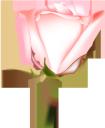 розовая роза, цветок розы, бутон розы, цветы, флора, роза, зеленое растение, pink rose, rose flower, flowers, green plant, rosarose, rosenblüte, rosenknospe, blumen, grüne pflanze, rose rose, fleur rose, bouton de rose, fleurs, flore, rose, plante verte, capullo de rosa, fiore rosa, bocciolo di rosa, fiori, pianta verde, rosa rosa, rosa flor, rosebud, flores, flora, rosa, planta verde, рожева троянда, квітка троянди, бутон троянди, квіти, троянда, зелена рослина