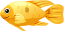морская рыба, рыбы кораллового рифа, морская фауна, океанические рыбы, sea fish, coral reef fish, marine fauna, ocean fish, korallenrifffische, meeresfauna, meeresfische, poissons de récifs coralliens, faune marine, poissons de mer, peces de arrecife de coral, peces de mar, pesce di mare, pesci della barriera corallina, fauna marina, pesci oceanici, peixes do mar, peixes de recife de coral, fauna marinha, peixes do oceano, морська риба, риби коралового рифу, морська фауна, океанічні риби