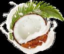 кокос, кокосовый сок, кокосовое молоко, ветка пальмы, брызги сока, напитки, coconut, coconut juice, coconut milk, palm branch, splashing juice, drinks, kokosnuss, kokosnusssaft, kokosmilch, palmzweig, spritzsaft, getränke, noix de coco, jus de coco, lait de coco, branche de palmier, éclaboussures de jus, boissons, jugo de coco, leche de coco, rama de palmera, jugo de salpicaduras, cocco, succo di cocco, latte di cocco, ramo di palma, spruzzi di succo, bevande, coco, suco de coco, leite de coco, ramo de palmeira, suco de salpicos, bebidas, кокосовий сік, кокосове молоко, гілка пальми, бризки соку, напої