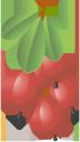 барбарис, красная ягода, ягода барбариса, красный, barberry, red berry, barberry berry, red, rote beeren, berberitze, rot, épine-vinette, baie rouge, baie de l'épine-vinette, rouge, agracejo, baya roja, bérbero baya, rojo, frutti di bosco, bacca rossa, bacche di bacche, rosso, arbusto, baga vermelha, baga de arvore, vermelho, червона ягода, ягода барбарису, червоний