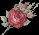 роза, цветок розы, красная роза, бутон розы, цветы, флора, rose flower, red rose, flowers, rosenblüte, rote rose, rosenknospe, blumen, rose, rose rouge, rosebud, fleurs, flore, rosa roja, capullo de rosa, fiore rosa, rosa rossa, bocciolo di rosa, fiori, rosa, rosa flor, rosa vermelha, botão de rosa, flores, flora, троянда, квітка троянди, червона троянда, бутон троянди, квіти