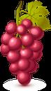 виноград, гроздь винограда, красный виноград, винная ягода, виноделие, grapes, a bunch of grapes, red grapes, wine berry, winemaking, trauben, eine weintraube, rote trauben, weinbeeren, weinbereitung, raisin, grappe de raisin, raisin rouge, baie de vin, vinification, un racimo de uvas, uvas rojas, bayas de vino, elaboración del vino, uva, un grappolo d'uva, uva rossa, bacca del vino, vinificazione, uvas, um cacho de uvas, uvas vermelhas, vinho berry, vinificação, гроно винограду, червоний виноград, винна ягода, виноробство