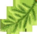 ветка ёлки, новый год, ёлка, новогоднее украшение, зеленое растение, ветка дерева, хвоя, new year, tree, christmas decoration, green plant, tree branch, needles, weihnachtsbaumast, neues jahr, weihnachtsbaum, weihnachtsdekoration, grünpflanze, baumast, nadeln, nouvel an, arbre, décoration de noël, plante verte, branche d'arbre, aiguilles, rama de árbol de navidad, año nuevo, árbol de navidad, decoración navideña, rama de árbol, agujas, filiale dell'albero di natale, nuovo anno, albero di natale, decorazione di natale, pianta verde, ramo di un albero, aghi, galho de árvore de natal, ano novo, árvore de natal, decoração de natal, planta verde, galho de árvore, agulhas, гілка ялинки, новий рік, ялинка, новорічна прикраса, зелена рослина, гілка дерева