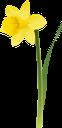 нарцисс, цветок нарцисс, желтый цветок, весенние цветы, цветы, флора, daffodil, daffodil flower, yellow flower, spring flowers, flowers, narzisse, narzissenblume, gelbe blume, frühlingsblumen, blumen, jonquille, fleur de jonquille, fleur jaune, fleurs de printemps, fleurs, flore, flor de narciso, flor amarilla, flores de primavera, giunchiglia, giunchiglia fiore, fiore giallo, fiori primaverili, fiori, narciso, flor narciso, flor amarela, flores da primavera, flores, flora, нарцис, квітка нарцис, жовта квітка, весняні квіти, квіти