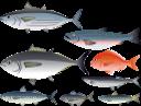 рыба, тунец, морской окунь, горбуша, морепродукты, морские обитатели, морские рыбы, морская фауна, морские животные, fish, tuna, sea bass, pink salmon, seafood, marine life, sea fish, marine fauna, marine animals, fisch, thunfisch, wolfsbarsch, rosa lachs, meeresfrüchte, meereslebewesen, seefisch, meeresfauna, meerestiere, poisson, thon, bar, saumon rose, fruits de mer, vie marine, poisson de mer, faune marine, animaux marins, pescado, atún, lubina, salmón rosado, mariscos, vida marina, peces de mar, animales marinos, pesce, tonno, spigola, salmone rosa, frutti di mare, vita marina, pesce di mare, fauna marina, animali marini, peixe, atum, robalo, salmão rosa, marisco, vida marinha, peixe do mar, fauna marinha, animais marinhos, риба, тунець, морський окунь, морепродукти, морські мешканці, морські риби, морська фауна, морські тварини