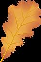 дуб, листья дуба, желтый лист, осенние листья, осень, осенний лист, листок дерева, листопад, oak, oak leaves, yellow leaf, autumn leaves, autumn, autumn leaf, leaf of tree, falling leaves, eiche, eichenblätter, gelbes blatt, herbstlaub, herbst, herbstblatt, blatt des baums, fallende blätter, chêne, feuilles de chêne, feuille jaune, feuilles d'automne, automne, feuille d'automne, feuille d'arbre, feuilles qui tombent, roble, hojas de roble, hoja amarilla, hojas de otoño, otoño, hoja de otoño, hoja de árbol, hojas caídas, quercia, foglie di quercia, foglie gialle, autunno, foglie autunnali, foglie d'albero, foglie cadenti, carvalho, folhas de carvalho, folha amarela, folhas de outono, outono, folha de outono, folha de árvore, folhas caindo, листя дуба, жовтий лист, осіннє листя, осінь, осінній лист