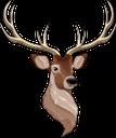 животные, олень, голова оленя, animals, deer, deer head, tiere, hirsche, hirschkopf, animaux, cerf, tête de cerf, animales, ciervos, cabeza de venado, animali, cervo, testa di cervo, animais, veado, cabeça de veado, тварини