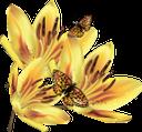 желтый цветок, цветы, флора, yellow flower, flowers, gelbe blume, blumen, fleur jaune, fleurs, flore, flor amarilla, fiore giallo, fiori, flor amarela, flores, flora, жовта квітка, квіти, бабочка, метелик