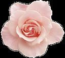 флора, цветок, роза, бутон розы, flower, rose bud, blume, rosenknospe, flore, fleur, rose, bourgeon rose, capullo de rosa, fiore, rosa, bocciolo di rosa, flora, flor, aumentou, cor de rosa