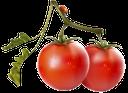 красный помидор, томат, томат для приготовления кетчупа, спелый помидор, red tomato, tomato, tomato for ketchup, ripe tomato, rote tomaten, tomaten, tomatenketchup zum kochen, reife tomaten, rouge tomate, ketchup de tomates pour la cuisine, tomate mûre, tomate rojo, salsa de tomate para cocinar, rosso pomodoro, pomodoro, ketchup per cucinare, pomodoro maturo, tomate vermelho, tomate, ketchup para cozinhar, tomate maduro