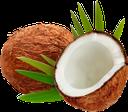кокосовый орех, кокос, кокосы, coconut, coconuts, kokos, kokosnuss, kokosnüsse, noix de coco, coco, noce di cocco, noci di cocco, кокосовий горіх