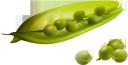 горох, стручок гороха, бобы, бобовые, зеленый, peas, pea pods, beans, pulses, green, erbsen, erbsenschoten, bohnen, hülsenfrüchte, grün, pois, gousses de pois, haricots, légumineuses, vert, guisantes, vainas de guisantes, frijoles, legumbres, piselli, baccelli di pisello, fagioli, legumi, ervilhas, feijão, legumes, verde, стручок гороху, боби, бобові, зелений