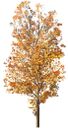 флора, лиственное дерево, зеленое растение, осенняя листва, желтый лист, осень, deciduous tree, green plant autumn leaves, yellow leaf, autumn, laubbaum, grünpflanze herbstblätter, gelbes blatt, herbst, flore, arbre à feuilles caduques, feuilles d'automne de plantes vertes, des feuilles jaunes, automne, árbol de hoja caduca, hojas verdes otoño planta, hoja amarilla, otoño, albero a foglie decidue, pianta foglie di autunno verdi, foglia gialla, autunno, flora, árvore de folha caduca, folhas de outono planta verde, folha amarela, outono