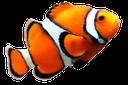 рыба клоун, коралловый риф, морская рыбка, красивая морская рыба, clown fish, coral reef, marine fish, beautiful saltwater fish, clownfische, korallenriff, meeresfische, schöne seefische, poissons clown, récifs coralliens, les poissons de mer, de beaux poissons d'eau salée, peces payaso, arrecife de coral, peces marinos, peces de agua salada hermosa, pesce pagliaccio, scogliera di corallo, pesci marini, pesci di mare bella, peixe-palhaço, recife de coral, peixes marinhos, bonito peixes de água salgada