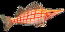 красная морская рыбка, красивая рыба, кудрепер длиннорылый, red sea fish, beautiful fish, rote meer fisch, schöne fische, rouge poissons de mer, poissons magnifiques, pescado de mar rojo, hermoso pescado, pesce di mare rosso, bei pesci, mar vermelho dos peixes, peixes bonito, kudreper dlinnoryly