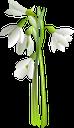 подснежник, цветок подснежника, весенние цветы, первоцвет, цветы, флора, snowdrop, snowdrop flower, spring flowers, primrose, flowers, schneeglöckchen, schneeglöckchenblume, frühlingsblumen, primel, blumen, perce-neige, fleur de perce-neige, fleurs de printemps, primevère, fleurs, flore, campanillas, flores de campanillas, flores de primavera, primavera, bucaneve, fiore bucaneve, fiori primaverili, primula, fiori, floco de neve, flor snowdrop, flores da primavera, prímula, flores, flora, пролісок, квітка проліска, весняні квіти, першоцвіт, квіти