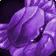inv, jewelcrafting, purplecrab
