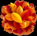 осенняя листва, красный лист, желтый лист, осень, опавшая листва, осенний лист растения, рябина, желуди, жёлудь дуба, природа, autumn foliage, red leaf, yellow leaf, autumn, fallen leaves, autumn leaf of a plant, mountain ash, acorns, oak acorn, herbstlaub, rotes blatt, gelbes blatt, herbst, laub, herbstblatt einer pflanze, eberesche, eicheln, eichel eichel, natur, feuillage d'automne, feuille rouge, feuille jaune, automne, feuilles mortes, feuille d'automne d'une plante, sorbier, glands, gland de chêne, nature, follaje de otoño, hoja roja, hoja amarilla, otoño, hojas caídas, hoja de otoño de una planta, fresno de montaña, bellotas, bellota de roble, naturaleza, fogliame autunnale, foglia rossa, foglia gialla, autunno, foglie cadute, foglia d'autunno di una pianta, cenere di montagna, ghiande, ghianda di quercia, natura, folhagem de outono, folha vermelha, folha amarela, outono, folhas caídas, folha de outono de uma planta, cinza de montanha, bolota, bolota de carvalho, natureza, осіннє листя, червоний лист, жовтий лист, осінь, опале листя, осінній лист рослини, горобина, жолуді, жолудь дуба