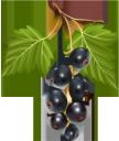 черная смородина, ягода смородины, ветка смородины, ягоды, синий, black currant, currant berry, currant branch, berries, blue, schwarze johannisbeere, johannisbeere, johannisbeere zweig, beeren, blau, cassis, baie de cassis, branche de cassis, baies, bleu, grosella negra, grosella, rama de grosella, bayas, ribes nero, bacche di ribes, ramo di ribes, frutti di bosco, blu, groselha preta, bagas de groselha, ramo de groselha, bagas, azul, чорна смородина, ягода смородини, гілка смородини, ягоди, синій