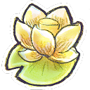 g12, flower lotus