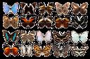бабочка, насекомые, набор бабочек, энтомологическая коллекция, бабочки, butterfly, insects, a set of butterflies, an entomological collection, butterflies, insekten, schmetterlinge satz, entomologischen sammlung, schmetterling, insectes, papillons ensemble, collections entomologiques, papillon, insectos, mariposas conjunto, colecciones entomológicas, mariposa, insetti, farfalle set, collezioni entomologiche, farfalla, insetos, borboletas set, coleções entomológicas, borboleta, метелик, комахи, набір метеликів, ентомологічна колекція, метелики