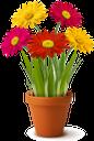 хризантема, вазон, цветы хризантемы, флора, красный цветок, красный, желтый цветок, желтый, chrysanthemum, flower pot, chrysanthemum flowers, red flower, red, yellow flower, yellow, chrysantheme, blumentopf, chrysanthemen, rote blume, rot, gelbe blume, gelb, chrysanthème, pot de fleur, fleurs de chrysanthème, flore, fleur rouge, rouge, fleur jaune, jaune, maceta, flores de crisantemo, flor roja, rojo, flor amarilla, amarillo, crisantemo, vaso di fiori, fiori di crisantemo, fiore rosso, rosso, fiore giallo, giallo, crisântemo, vaso de flores, flores de crisântemo, flora, flor vermelha, vermelho, flor amarela, amarelo, квіти хризантеми, червона квітка, червоний, жовта квітка, жовтий