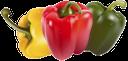 сладкий перец, болгарский перец, красный сладкий перец, желтый сладкий перец, стручок сладкого перца, зеленый сладкий перец, sweet pepper, bell pepper, red sweet pepper, yellow sweet pepper, sweet pepper pod, green sweet pepper, paprika, rote paprika, gelbe paprika, pod paprika, grüne paprika, poivron, poivron rouge, poivron jaune, pod poivre, poivron vert, pimiento dulce, pimiento, pimiento rojo, pimiento amarillo, pod pimiento, pimiento verde, peperone, pepe rosso dolce, peperone giallo, pod pepe, peperone verde, pimentão, pimenta de sino, pimenta doce vermelha, amarela pimenta doce, pod pimenta, pimentão verde