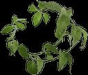 зеленый лист, зеленое растение, зеленый, green leaf, green plant, green, grünes blatt, grüne pflanze, grün, feuille verte, plante verte, vert, hoja verde, foglia verde, pianta verde, folha verde, planta verde, verde, зелений лист, зелена рослина, зелений