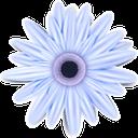 цветы, голубая хризантема, голубой цветок, флора, голубой, хризантема, flowers, blue chrysanthemum, blue flower, blue, chrysanthemum, blumen, blaue chrysantheme, blaue blume, blau, chrysantheme, fleurs, chrysanthème bleu, fleur bleue, flore, bleu, chrysanthème, crisantemo azul, fiori, crisantemo blu, fiore blu, blu, crisantemo, flores, crisântemo azul, flor azul, flora, azul, crisântemo, квіти, блакитна хризантема, блакитна квітка, блакитний