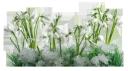 цветы подснежники, весна, снег, цветущий подснежник, белый цветок, flowers snowdrops, spring, snow, blossoming snowdrop, white flower, blumen schneeglöckchen, frühling, schnee, blühende schneeglöckchen weiße blume, fleurs snowdrops, le printemps, la neige, snowdrop floraison fleur blanche, flores campanillas de invierno, nieve, floración campanilla blanca flor blanca, fiori bucaneve, fioritura bucaneve fiore bianco, flores snowdrops, primavera, neve, florescendo snowdrop flor branca