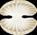 ракушка, моллюск, перламутровая ракушка, море, shell, clam, mother of pearl shell, sea, muschel, perlmutt muschel, meer, coquille, palourde, nacre, mer, almeja, concha de nácar, conchiglia, vongola, madreperla conchiglia, mare, concha, molusco, madrepérola, mar, черепашка, молюск, перламутрова мушля