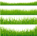 трава, зеленая трава, зеленое растение, газон, зеленый, grass, green grass, green plant, lawn, green, gras, grünes gras, grüne pflanze, rasen, grün, herbe, vert herbe, plante verte, pelouse, vert, hierba, hierba verde, césped, erba, erba verde, pianta verde, prato, capim, capim verde, planta verde, gramado, verde, зелена трава, зелена рослина, зелений