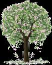 дерево, зеленое растение, цветущее дерево, флора, весна, tree, green plant, blooming tree, spring, baum, grüne pflanze, blühender baum, frühling, arbre, plante verte, flore, arbre fleurissant, printemps, árbol, árbol floreciente, albero, pianta verde, albero in fiore, árvore, planta verde, flora, árvore em flor, primavera, зелена рослина, квітуче дерево
