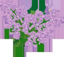 цветы, фиолетовые цветы, флористика, флора, flowers, purple flowers, floristics, blumen, lila blumen, floristik, fleurs, fleurs violettes, floristique, flore, flores de color púrpura, fiori, fiori viola, floristica, flores, flores roxas, florística, flora, квіти, фіолетові квіти