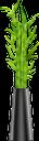 бамбук, комнатные растения, вазон, зеленое растение, bamboo, indoor plants, flowerpot, green plant, bambus, zimmerpflanzen, blumentopf, grünpflanze, bambou, plantes d'intérieur, pot de fleur, plante verte, bambú, maceta, bambù, piante d'appartamento, vaso di fiori, pianta verde, bambu, plantas de interior, vaso de plantas, planta verde, кімнатні рослини, зелена рослина