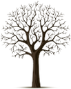 дерево, зеленое растение, флора, сухое дерево, tree, green plant, dry tree, baum, grüne pflanze, trockener baum, arbre, plante verte, flore, arbre sec, árbol, árbol seco, albero, pianta verde, albero secco, árvore, planta verde, flora, árvore seca, зелена рослина, сухе дерево