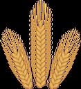 колоски пшеницы, хлеб, злаки, колосок, wheat spikes, cereals, spikelets, bread, weizenähren, getreide, ährchen, brot, epis de blé, céréales, épillets, pain, espigas de trigo, cereales, espiguillas, pan, spighe di grano, cereali, spighette, pane, picos de trigo, cereais, espetadas, pão, колоски пшениці, хліб
