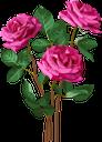 красная роза роза, бутон розы, цветок розы, красные розы, цветы, красный, роза, флора, red rose rose, bud rose, rose flower, red roses, flowers, red, rote rose stieg, knospe stieg, rosafarbene blume, rote rosen, blumen, rot, rose rouge rose, bourgeon rose, roses rouges, fleurs, rouge, rose, flore, rosa roja, capullo, rojo, rosa rossa, rosa bocciolo, fiore rosa, rose rosse, fiori, rosso, rosa rosa vermelha, rosa broto, rosa flor, rosas vermelhas, flores, vermelho, rosa, flora, червона троянда троянда, бутон троянди, квітка троянди, червоні троянди, квіти, червоний, троянда