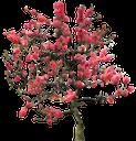 флора, лиственное дерево, зеленое растение, вишня, цветущая сакура, цветущее дерево, весна, deciduous tree, green plant, cherry, cherry blossoms, flowering tree, spring, laubbaum, grüne pflanze, kirsche, kirsche blüht, blühender baum, frühling, flore, arbre à feuilles caduques, plantes vert, cerise, fleurs de cerisier, arbre en fleurs, printemps, árbol de hoja caduca, cereza, flores de cerezo, árbol floreciente, albero a foglie decidue, pianta verde, ciliegia, fiori di ciliegio, albero fiorito, flora, árvore de folha caduca, planta verde, cereja, flores de cerejeira, árvore de florescência, primavera