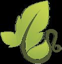 зеленый лист, green leaf, зелений лист, лист дерева, природа, leaf of a tree, nature, grünes blatt, baum, blatt, natur, feuille verte, feuille d'arbre, la nature, hoja verde, hoja del árbol, la naturaleza, foglia verde, foglia albero, natura, folha verde, folha árvore, natureza
