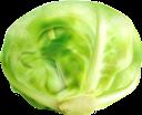 белокочанная капуста, капуста, зеленый, овощи, white cabbage, cabbage, green, vegetables, weißkohl, kohl, grün, gemüse, chou blanc, chou, vert, légumes, repollo blanco, repollo, vegetales, cavolo bianco, cavolo, verdure, repolho branco, repolho, verde, legumes, білокачанна капуста, зелений, овочі
