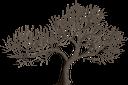 дерево, засохшее дерево, дерево без листьев, зеленое растение, tree, dried tree, leafless tree, green plant, baum, getrockneter baum, blattloser baum, grüne pflanze, arbre, arbre séché, arbre sans feuilles, plante verte, árbol, árbol seco, árbol sin hojas, albero, albero secco, albero senza foglie, pianta verde, árvore, árvore seca, árvore sem folhas, planta verde, засохле дерево, дерево без листя, зелена рослина