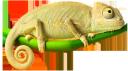 хамелеон на ветке, милый хамелеон, хамелеон, chameleon, chamäleon, caméléon, camaleón, camaleonte, camaleão