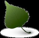 зеленый лист, green leaf, rohschicht, feuille verte, la hoja verde, foglio verde, folha verde, зелений лист, 生片