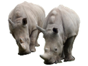 носорог, африканское животное, rhino, african animals, nashorn, afrikanische tiere, rhinocéros, animaux africains, animales africanos, animali africani, rinoceronte, animais africanos