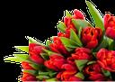 тюльпан, букет тюльпанов, красные тюльпаны, tulip, bouquet of tulips, red tulips, tulpe, strauß tulpen, rote tulpen, tulipe, bouquet de tulipes, tulipes rouges, tulipán, ramo de tulipanes, tulipanes rojos, tulipano, bouquet di tulipani, tulipani rossi, tulipa, buquê de tulipas, tulipas vermelhas